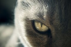 Cat Eye By allson