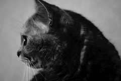 Cat Profile By allson